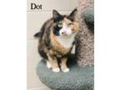 Adopt Dot a Orange or Red Domestic Shorthair / Domestic Shorthair / Mixed cat in