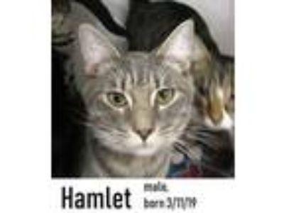 Adopt Hamlet a Tabby