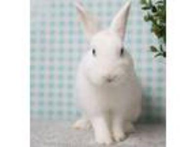 Adopt Chubby Cheeks a Bunny Rabbit