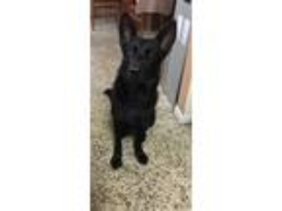 Adopt Ebny 0884 a German Shepherd Dog