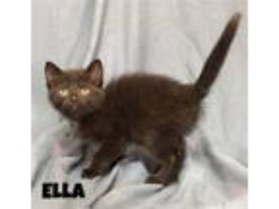Adopt Ella a Domestic Shorthair / Mixed cat in Williamstown, KY (25562818)