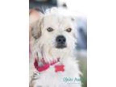 Adopt Champion a Terrier