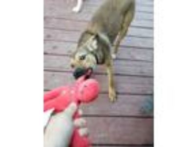 Adopt Krill Haros a Terrier