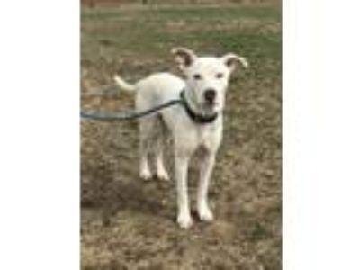 Adopt Baker/Bliss a Mixed Breed