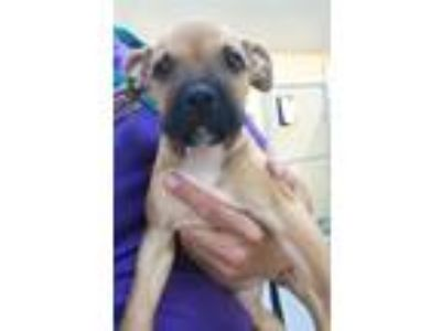 Adopt Isla a Terrier (Unknown Type, Small) / Mixed Breed (Medium) / Mixed dog in