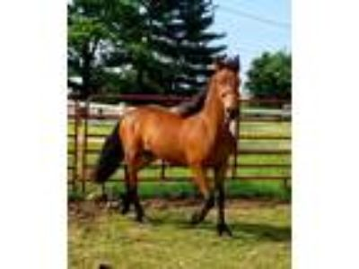 Craigslist - Horses for sale Classifieds in Indianapolis, Indiana