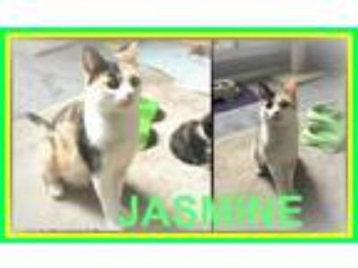 Adopt Jasmine a Black (Mostly) Domestic Shorthair / Mixed cat in Mount Mourne