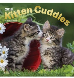 Kitten Cuddles 2018 12 x 12 Inch Monthly Square Wall Calendar