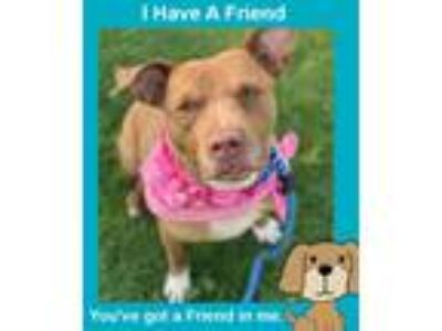 Adopt Sydney a Pit Bull Terrier / Mixed dog in Columbus, OH (25201638)