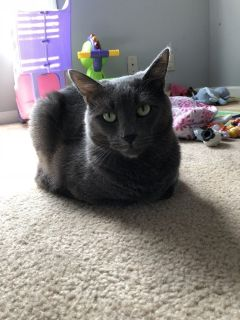 Beautiful Family Cat in Need of a Home