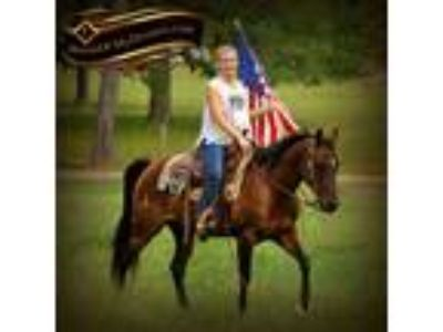 Sophisticated Catt mare Great in the arena or out on the trails