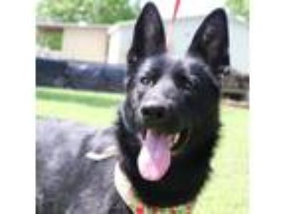 Adopt Fraulein JuM a German Shepherd Dog