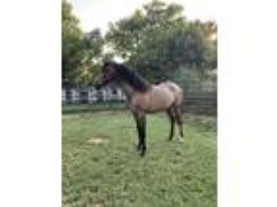 Craigslist - Horses for sale Classifieds in Tulsa, Oklahoma - Claz org