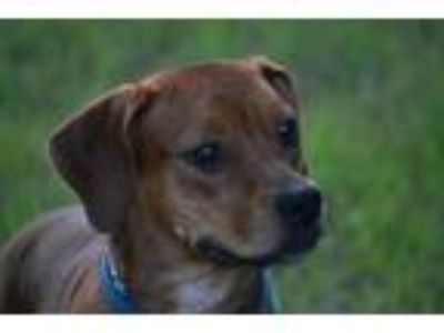 Craigslist Dogs For Sale Or Adoption Classifieds In Covington Tennessee Claz Org