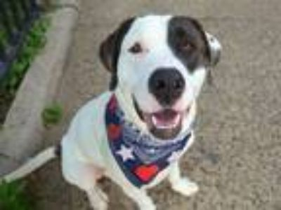 Adopt Herbie a Mixed Breed (Large) / Mixed dog in New York, NY (25626417)