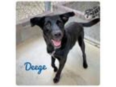 Adopt DEEGE a Border Collie / Mixed dog in Ocala, FL (25792890)