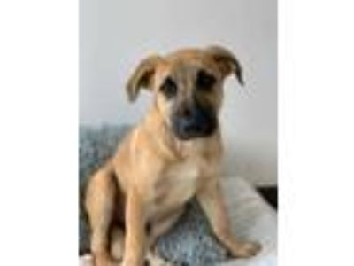 Puppy - For Sale Classifieds in Endicott, New York - Claz org