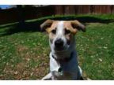 Adopt Lily Jean a Terrier