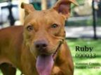 Adopt RUBY a Mixed Breed