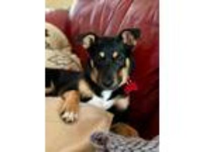 Adopt Finian a Terrier (Unknown Type, Medium) / Mixed dog in Boston