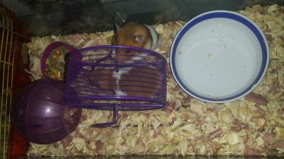 Mom & baby Hamster FREE