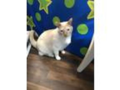 Adopt Diego a White (Mostly) Siamese / Mixed cat in Palos Heights, IL (23261315)