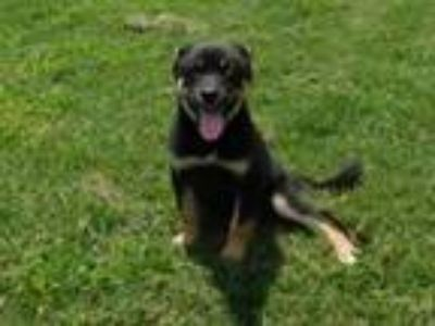 Adopt Tilly-Siloam Springs a Shepherd