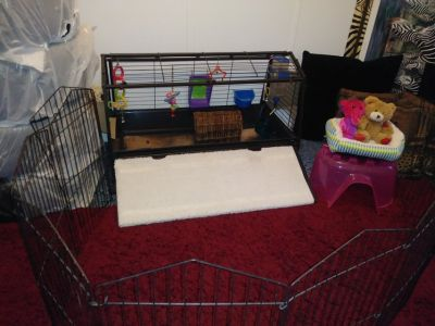 New guinea pig or Rabbit cage with accessories and fence