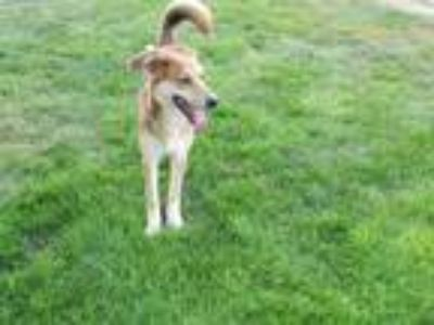 Dogs for Adoption Classifieds in Greenville, Ohio - Claz org