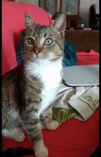Missing Kitten near Lake View Resort in Chetek, WI