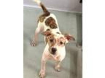Adopt Piper a Terrier (Unknown Type, Small) / Mixed dog in Fort Myers