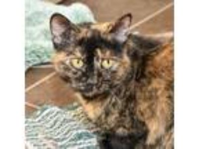 Adopt Penny Bonded Buddy With--Cookie a Domestic Medium Hair