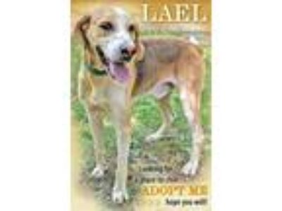 Adopt Lael a Hound (Unknown Type) / Mixed dog in Charlottesville, VA (25651845)