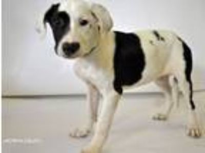 Adopt Frosty a Hound, Border Collie