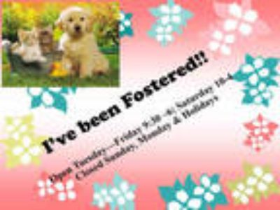 Adopt a Fawn Other/Unknown / Mixed rabbit in Moreno Valley, CA (25297789)