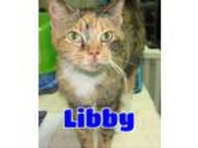 Adopt #68 Libby a Calico or Dilute Calico Calico / Mixed (short coat) cat in