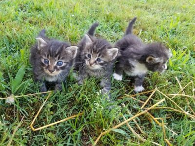 Free kittens to great homes