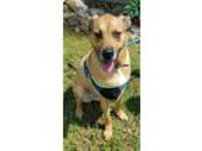 Adopt Smiley a German Shepherd Dog / Mixed dog in Madison, AL (25242335)