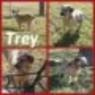 Trey Australian Cattle Dog / Blue Heeler Dog
