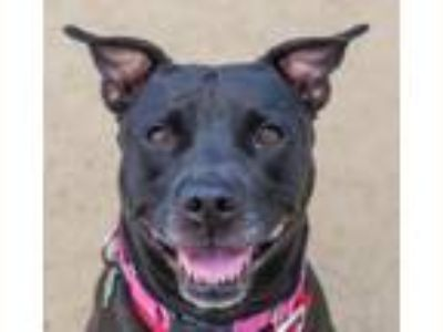 Dogs for Adoption Classified Ads in Medford, Oregon - Claz org