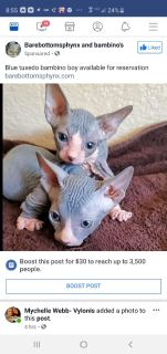 Kittens - For Sale Classifieds in Temecula, California