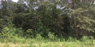 Partially Wooded Lot in a Cul De Sac in Mobile!