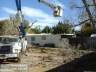 Tree Stump removal Tree Trimming Service Tree Doctor Arborist Q