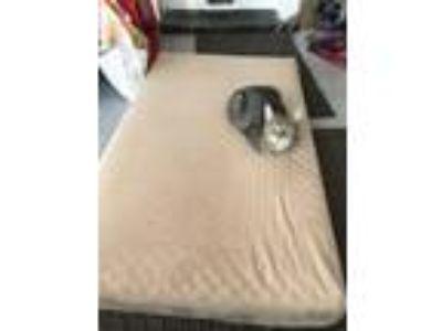 Adopt YaYa a Gray, Blue or Silver Tabby Domestic Mediumhair / Mixed cat in