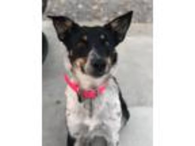 Adopt Giselle a Catahoula Leopard Dog / Retriever (Unknown Type) / Mixed dog in