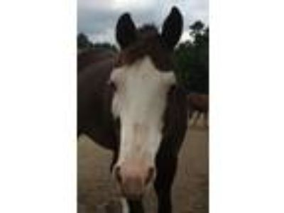 Adopt Whisper a Paint / Pinto
