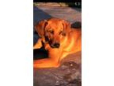 Adopt Seuss a Hound, Mixed Breed