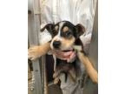 Adopt Fish a Mixed Breed (Medium) / Mixed dog in Fort Lupton, CO (25640759)