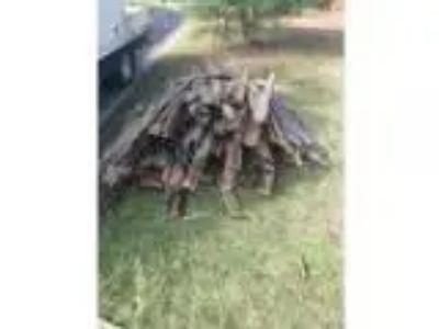Free fire wood pick up mardi