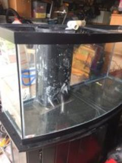 75 gallon bowfront salt water tank